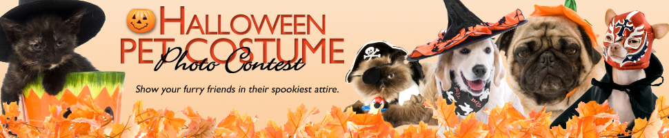 halloween pet costume photo contest - Pet Halloween Photo Contest